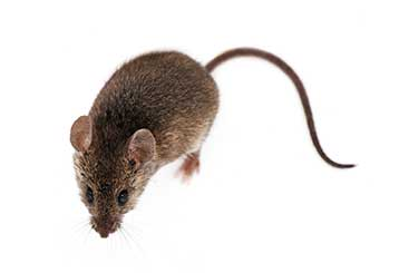Rodent Proofing | Attic Cleaning Simi Valley, CA